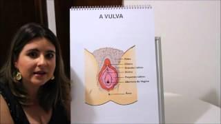 Principais dúvidas sobre a vulva e a vagina