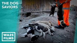 Saving 2018 Fifa Russia World Cup Host City Homeless Dogs! THE DOG SAVIORS - Hope For Dogs | My DoDo