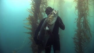 White Sea Bass Spearfishing with Terry Maas