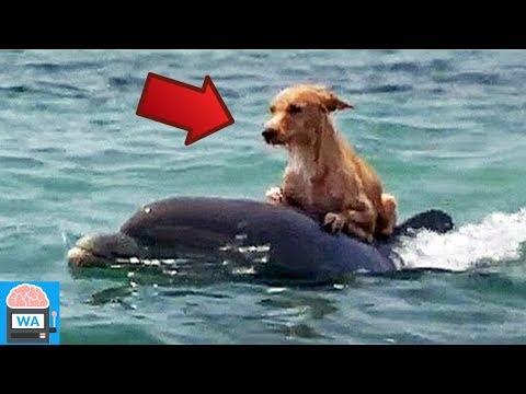 10 Tiere, die anderen Tieren das Leben gerettet haben!
