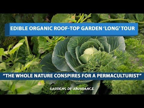 Edible Organic Roof-top Garden 'Long' tour!