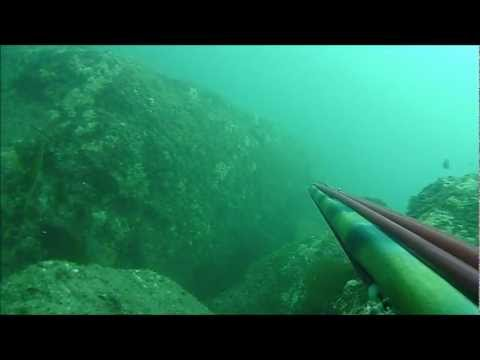 Mexico Spearfishing Seawolf sub