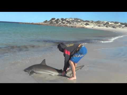 Land Based Shark Fishing!