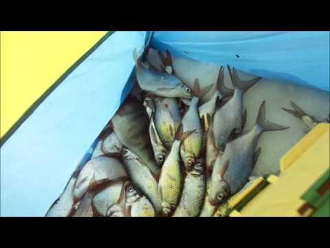 рыбалка на алаколе в казахстане
