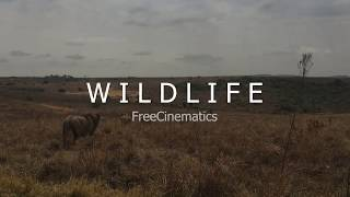 Wildlife Cinematics No Copyright Video - Free Video - FreeCinematics