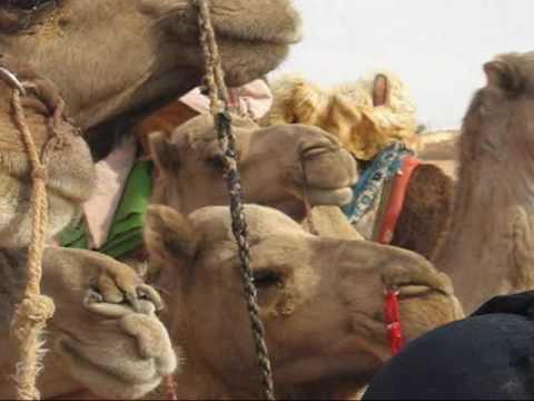 2009 Mauritanie Chinguetti, Camel Race, Courses de chameaux, 2ème journée