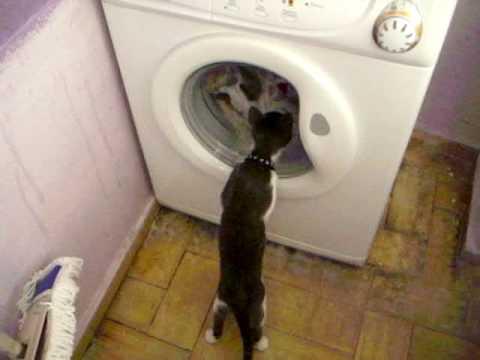 O gato e a Máquina de lavar roupa