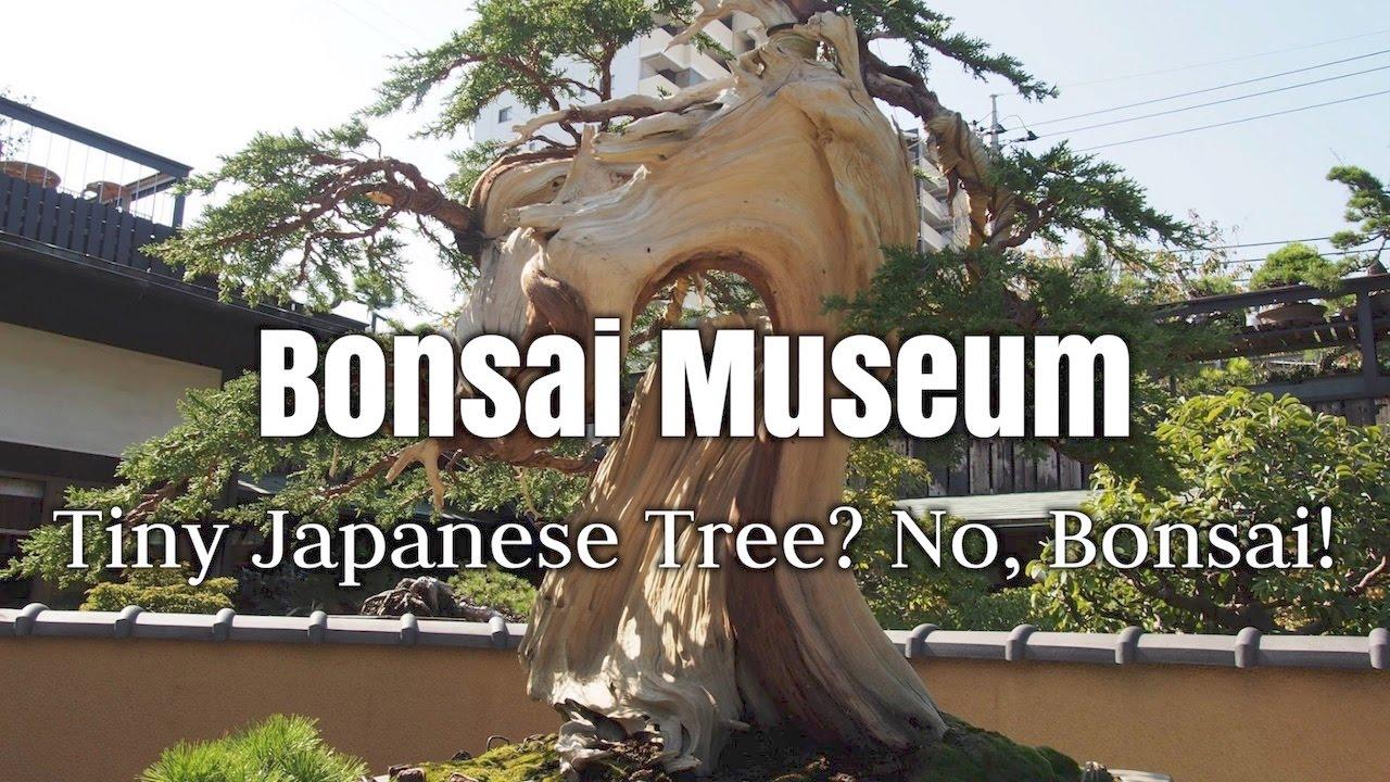 Bonsai Museum : Tiny Japanese Tree? No, Bonsai!