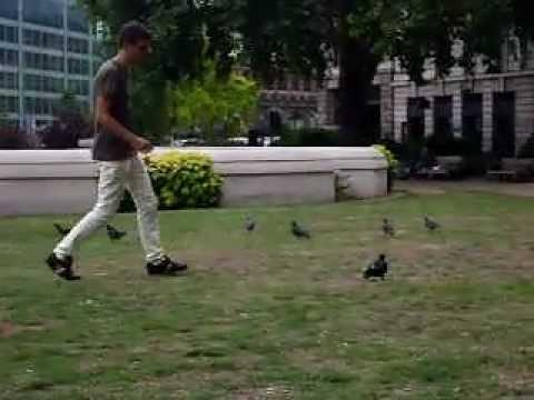Hunter pigeons in London...Caccia al piccione!