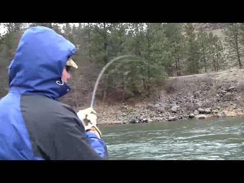 Clearwater River Guided Steelhead Fishing