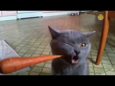 Cats Eating Vegetables and Fruits Compilation