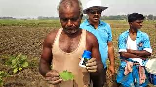 Farmers testimonials on Bringal  focused Arpit on whitefly & others pest