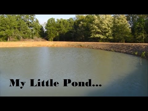 Pond Clearing &amp  Stocking Hybrid Bream