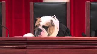 Gonzales v. Raich - Supreme Court Marijuana Case #RealAnimalsFakePaws #puppyjustice