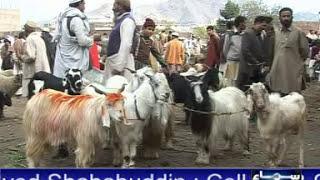 Swat News  Animal Mandi PKG