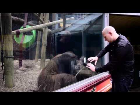 Орангутангу показали фокус с перемещением карты