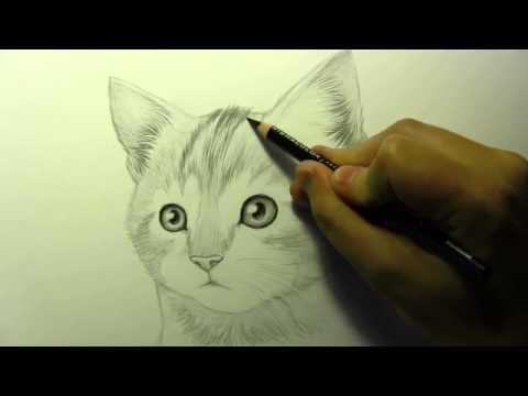 Видео как научиться рисовать котёнка