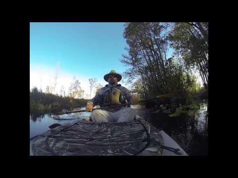 Okefenokee Swamp Trip