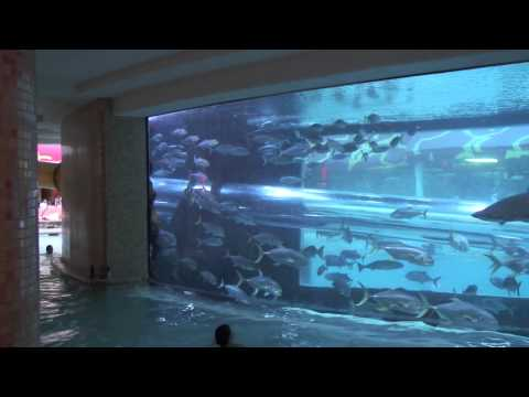Shark Slide Pool and Aquarium at Golden Nugget Las Vegas