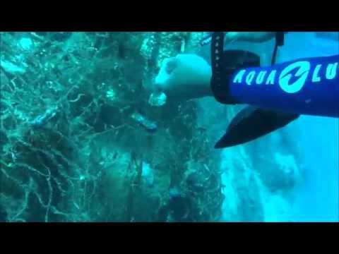 Saving A Stonefish in Anda, Bohol, Philippines 19 04 2013