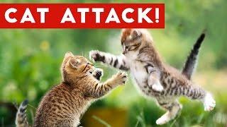 Funniest Cat Attack Videos Compilation | Funny Pet Videos
