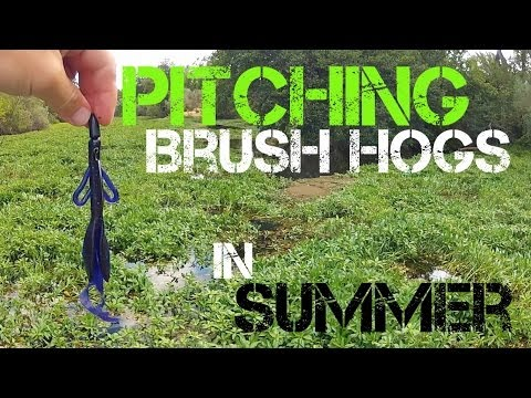 Bass Fishing- Pitching Brush Hogs in Summer (2014)
