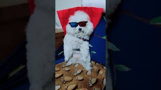 Look at these cute and funny puppies dogs 3244