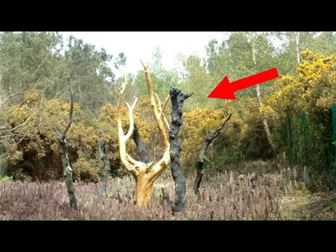 Mysterious Forests That Are Truly Haunted!