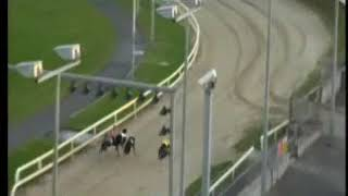 IGB - Greyhound & Petworld A4  23/05/2019 Race 9 - Limerick