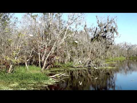 St Johns River Video