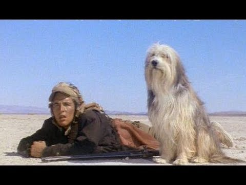 A Boy And His Dog (1975) video