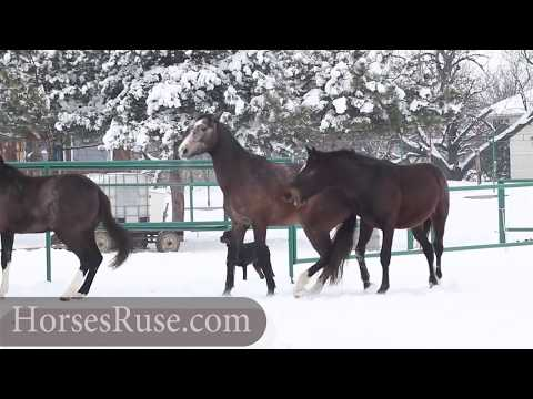 Wild Horses Mating video