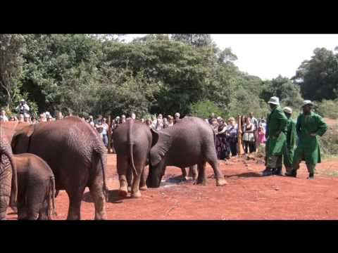 Daphne Sheldrick's  Elephant Orphanage in Kenya by Michael Fairchild