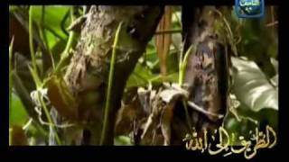 Asma Allah ul-Husna – Mishary Al-Afsay