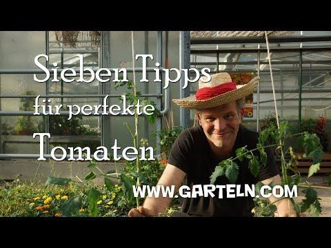 Tomaten pflanzen - Sieben Tipps für perfekte Tomaten