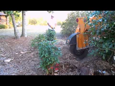 Taylor Tree Co. grinding stump out between shrubs and trees in Kiln, MS