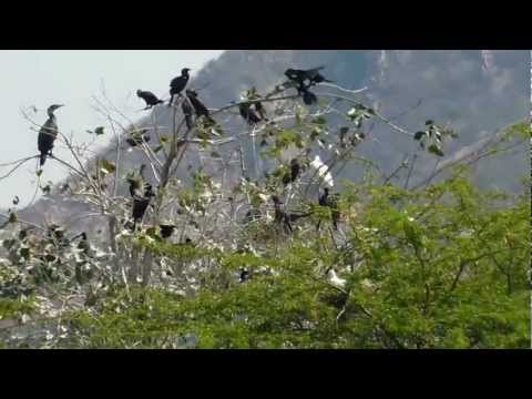 Birds of Jalmahal,Mansagar lake Jaipur 1