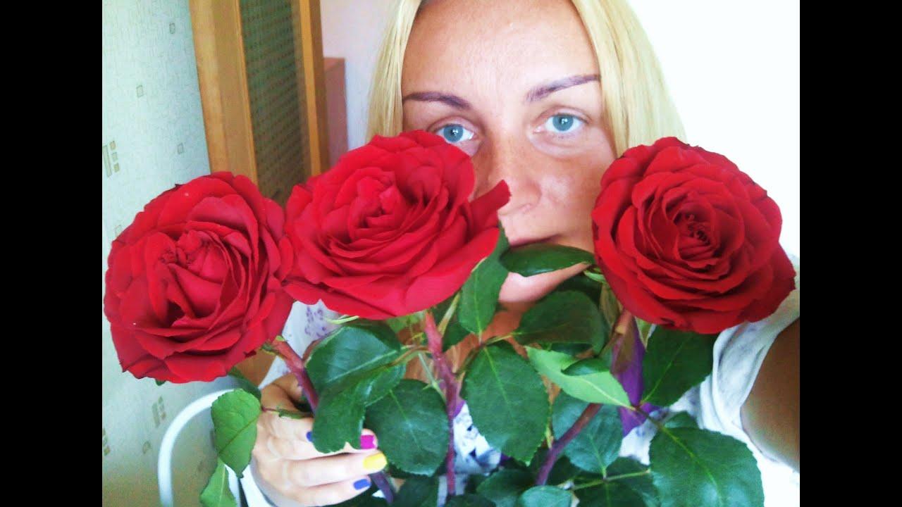 Что делать, чтобы розы дольше стояли: как сохранить розы в 46