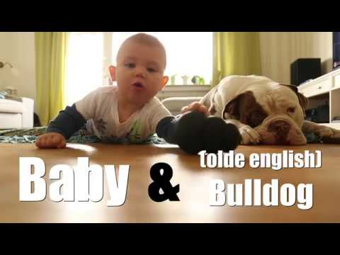 Baby & Bulldog (olde english bulldog)