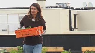 Парижане отдыхают от компьютеров, выращивая овощи на крыше (новости)