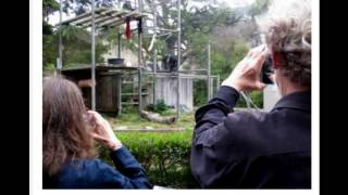 Chimpanzee Film featuring San Francisco Zoo Chimp Cobby!