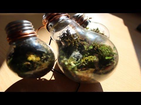 Manualidades ||  Como hacer un Jardín - Terrario en una Bombilla. Reciclar Bomb
