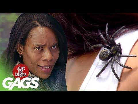 SPIDER on Shoulder Prank