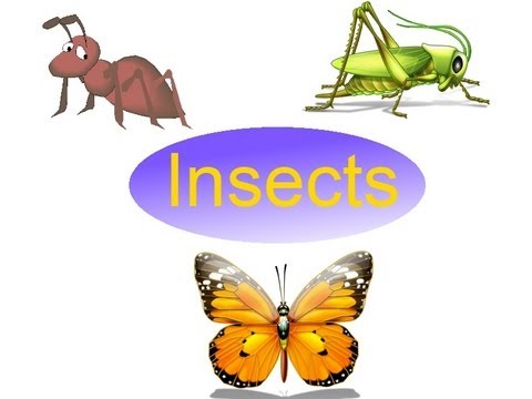 Insects Pictures With Names For Kids Names of Insects For Kids