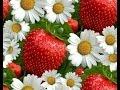 Ромашка біла, квітка кохання!! Ромашка белая, цветок любви! Daisy white flower of love !!!