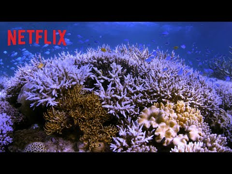 Chasing Coral | Officiële trailer [HD] | Netflix