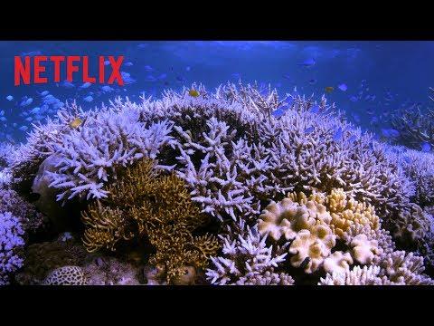 Chasing Coral | Officiële trailer [HD] | Netflix