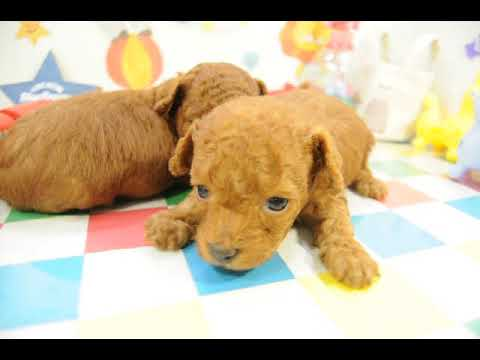 200639の仔犬4
