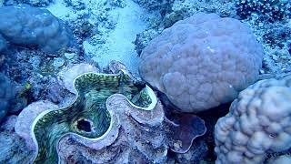 Diving the Barrier Reef  1st Dive Sept 2018