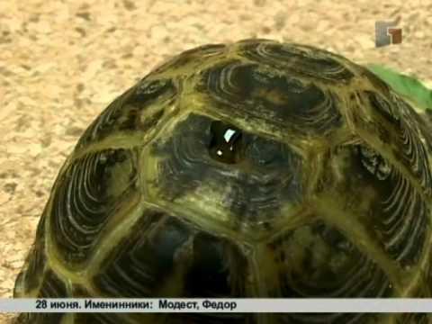Зверская жизнь.Как ухаживать за черепахой